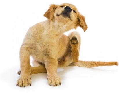 pet air purifier for dog dander